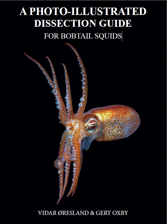 A PHOTO-ILLUSTRATED DISSECTION GUIDE FOR BOBTAIL SQUIDS By VIDAR ØRESLAND & GERT OXBY